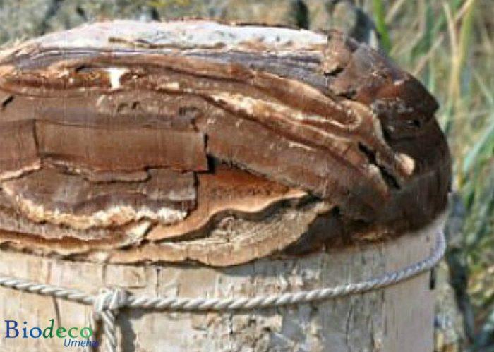 Detail van de biologisch afbreekbare Berkenschors-urn, handmatig afgewerkt met de schors van de Berk voor een asbijzetting in de aarde